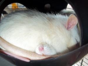 Penny qui dort... sur Shu